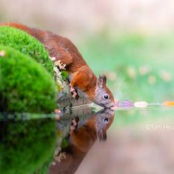 Zelf-reflectie