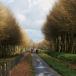 Oud hollands licht