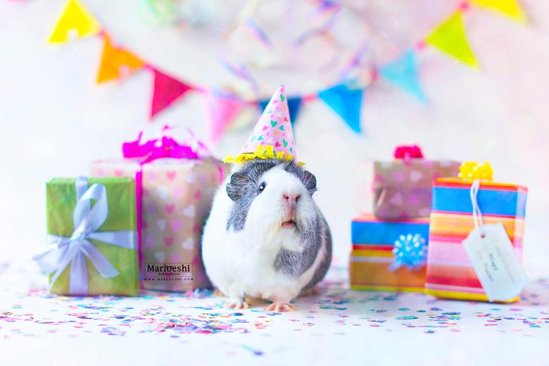 """Piggy party - Piggy parties are the best! <img  src=""""/images/smileys/smile.png""""/><br /> Mieps haar Instagram bestaat bijna één jaar, dus dat is zeker"""
