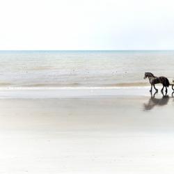 reisje langs het strand