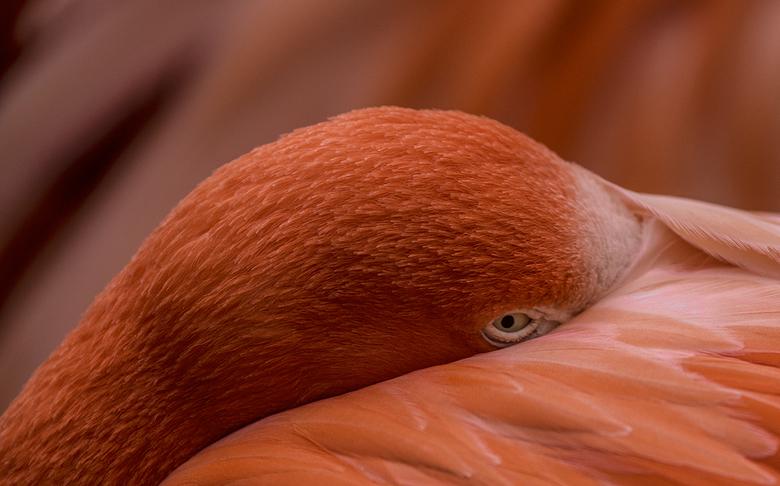 Oranje boven  -