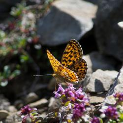 Zonnige vlinder