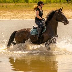 Paard houd van water
