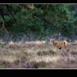 Bambie in het grote....... bos