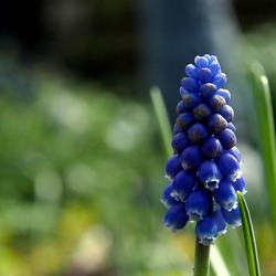 Blauw,..
