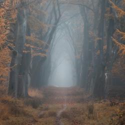 Misty Lane 3