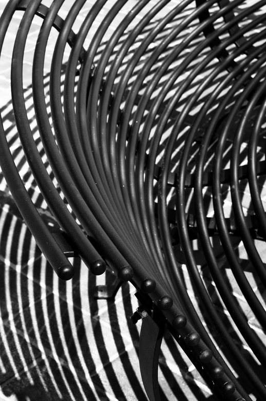 zebra... - Plotseling viel mijn oog op dit zwarte metalen bankje in de zon...