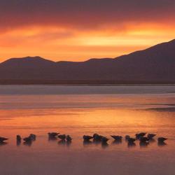 Zonsopgang met de vogels nog heerlijk in het water