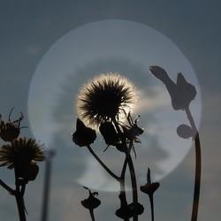 Bloem met zonlicht :-)