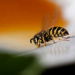 The Ant and the Wasp: Lonely