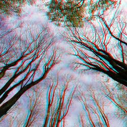 Bomen Zuiderpark Rotterdam 3D