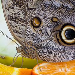Op het fruit