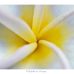 Floral Art I