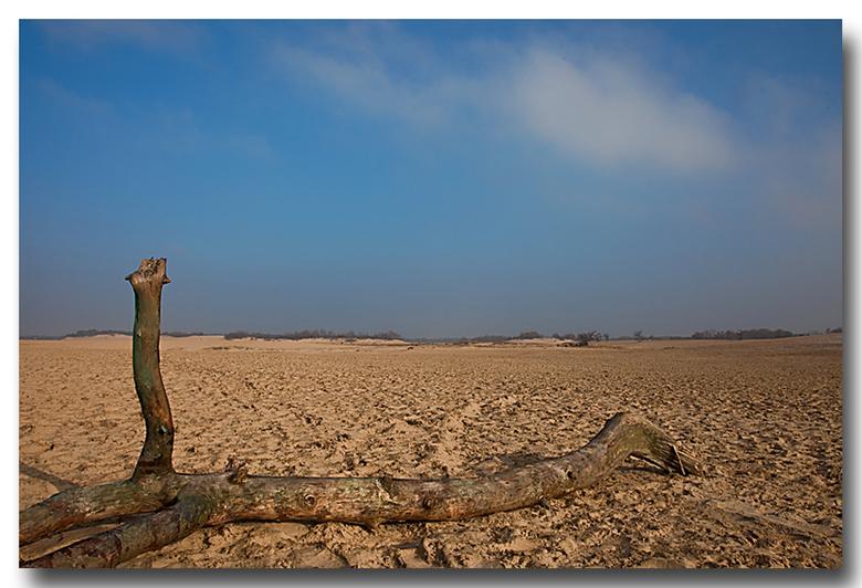 Duinen - Vandaag nog een rondje Loonse- en Drunense duinen gedaan.