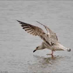 landing in de haven