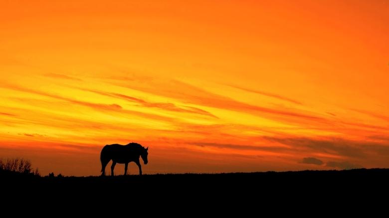 I'm A Poor, Lonesome Cow Horse... - 7 februari 2016, tegen 18 uur. Terwijl vele mensen bezig waren met het Carnavalsfeest, was het heerlijk rustig bui