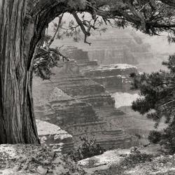 eeuwenoude natuurkracht langs de South Rim