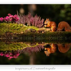 Summer squirrel