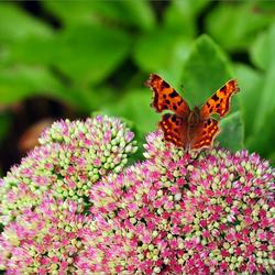 vlinder op bloem..