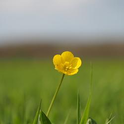 fijn geel