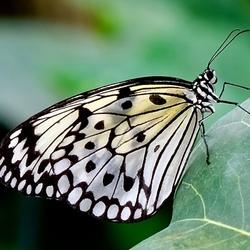 Vlindertuin vlinder