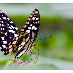 Vlinder pracht