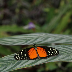 Vlinders aan de Vliet -8-