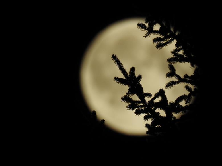 maan die door een boom schijnt