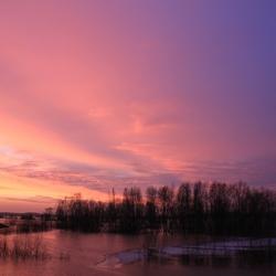purple morning 2