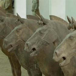 paarden terracotta leger