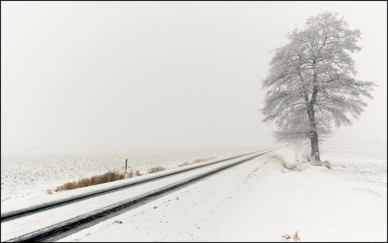 Stille wereld - Landweg in de buurt van het Twentse Goor in een snel opkomende mist.<br /> Mooi zoals het licht langzaam een pastelkleur kreeg