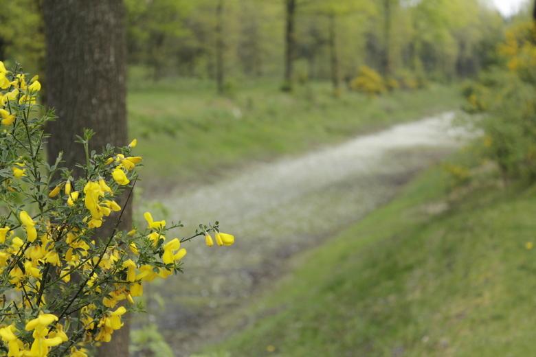 Yellow - Alle reacties welkom! <br /> Gr, Marijn