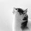 Kat zwart wit