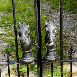 Horse on fence