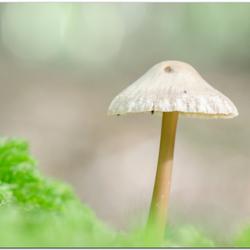 mooi klein paddenstoeltje