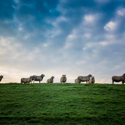 Symmetrische schapen