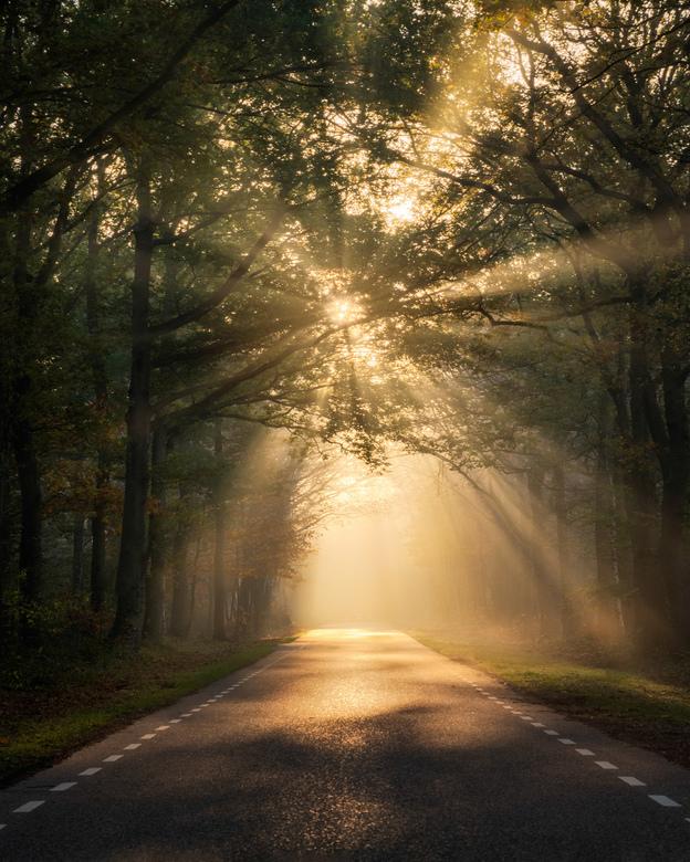The Perfect Light - Onderweg op zoek naar een mooie plek in het bos om te fotograferen kwam ik dit tegen. Ik moest hier wel voor stoppen natuurlijk.
