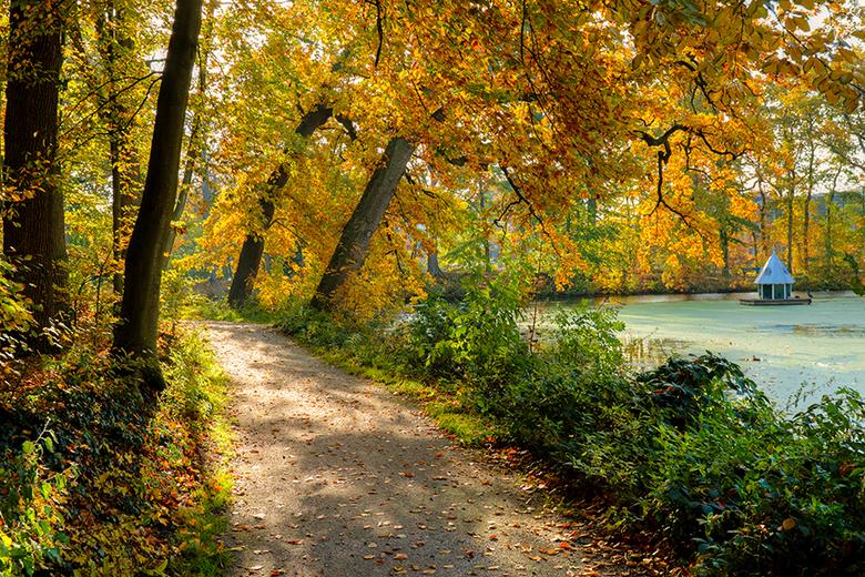 "Gouden bladerdek - Deze foto maakte ik eind oktober in park Herema State te Joure.<br /> <br /> Groet <a href=""http://www.piebevandenberg.nl"">http:/"