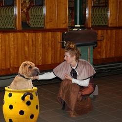 Bewerking: De hond in de pot vinden