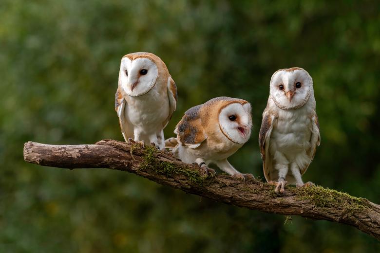 Op een rijtje - moeder met haar twee jongen