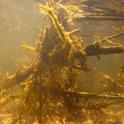 Onderwater (3)