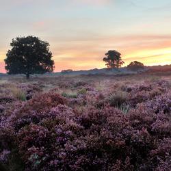 Zuiderheide Hilversum bij zonsopgang