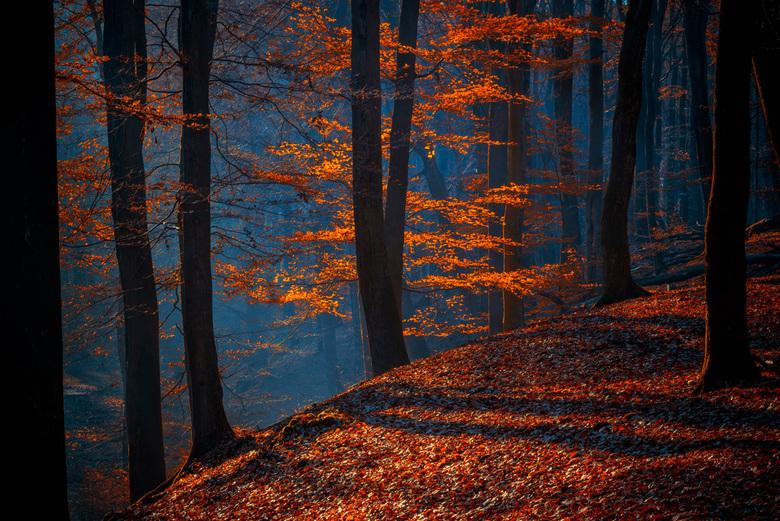 Herfst fantasie -
