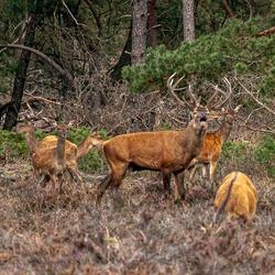 Bronst in Nationaal park de hoge Veluwe