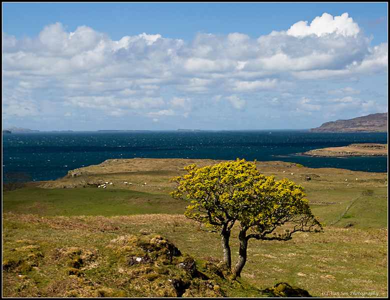 Lonely tree - Mull, Schotland