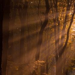 Zonnenharpen in het Speulderbos