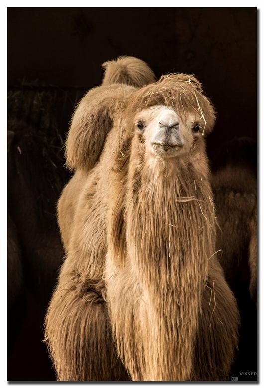 Camel - Canon 600D | ISO400 | 300mm | 1/400 sec. | f7.1