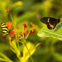 2 vlinders