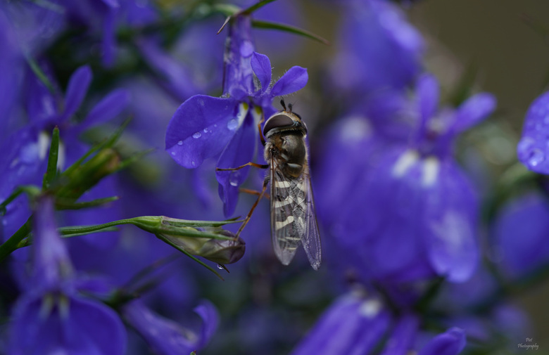 Een zweefvliegje -