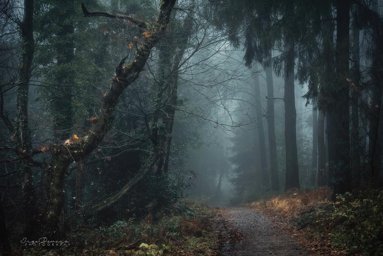 Fangorn Forest. -